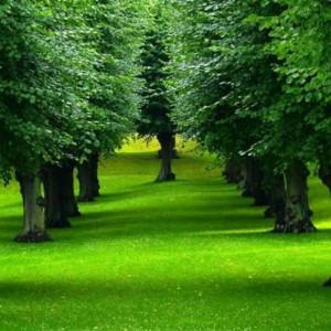 alberi ng1