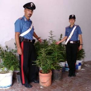 carabinieri canapa