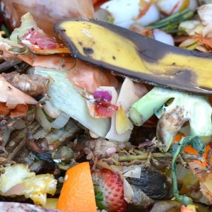 compost rifiuti umido