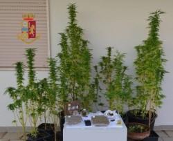 foto piante 1