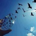 liberta barriere al vento