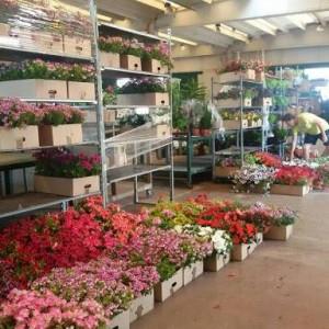mercato dei fiori di leverano 1 1